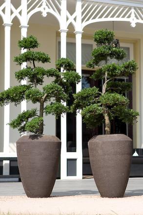 Grote planten voor buiten